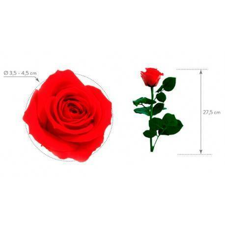 Rosa mini eterna preservada