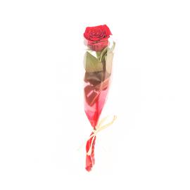Rosa roja en funda