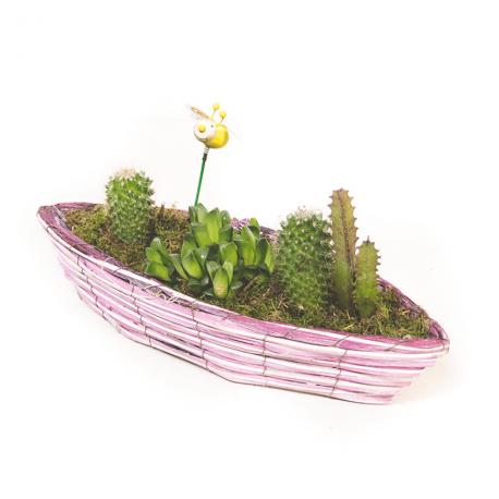 Arreglo de cactus naturales
