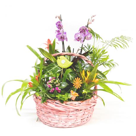 Cesta con orquídea
