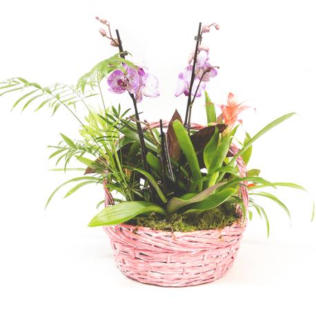 Composición de plantas variadas