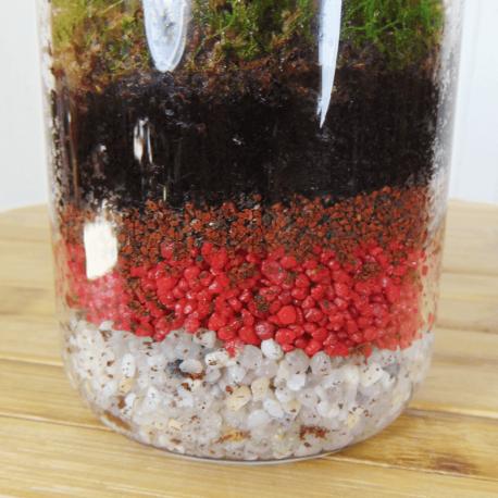 Planta en botella de cristal