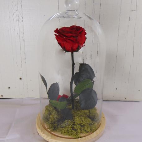 Rosa eterna en cúpula