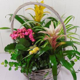 Foto cesta de plantas