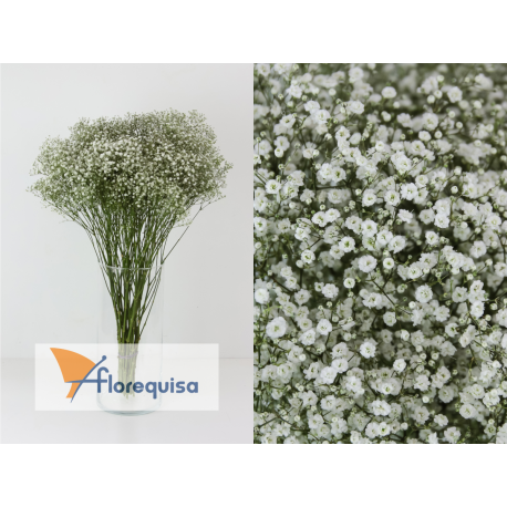 Paniculata (paquete)